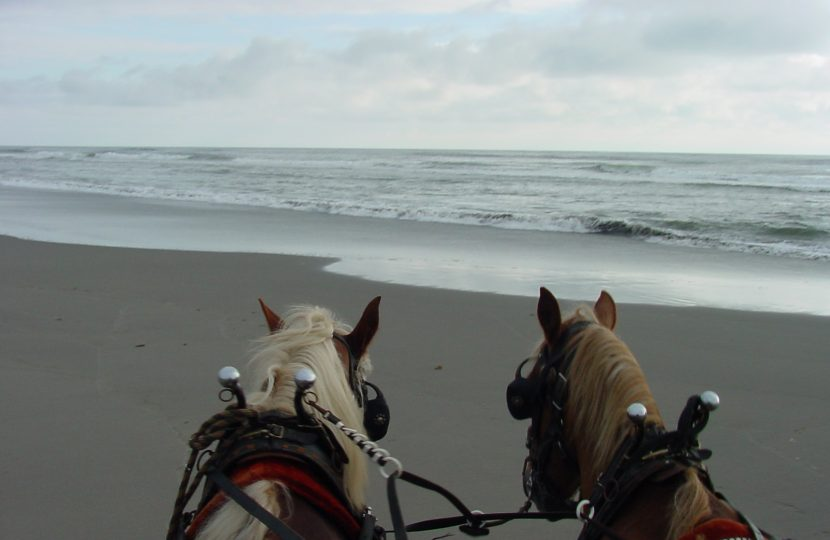 Wagon Ride on the Beach